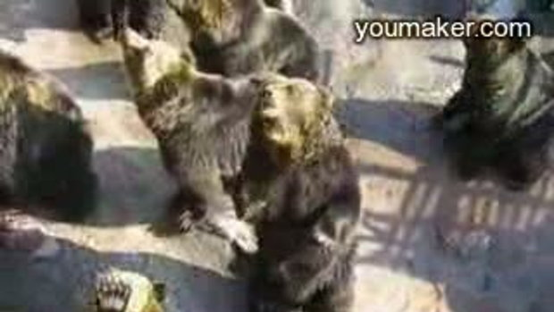 หมีดำทำท่าคุยกับ คนในสวนสัตว์