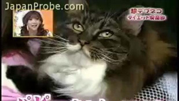 เจ้าแมวบิ๊กไซส์