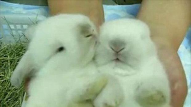 กระต่าย น่ารัก!!