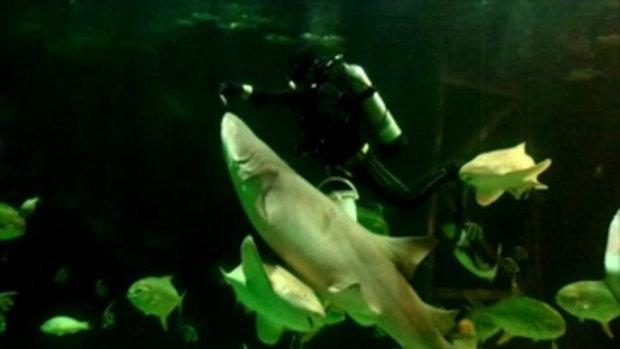 ให้อาหารปลาที่สวนสัตว์น้ำสงขลา(เรียกชื่อเองนะ)