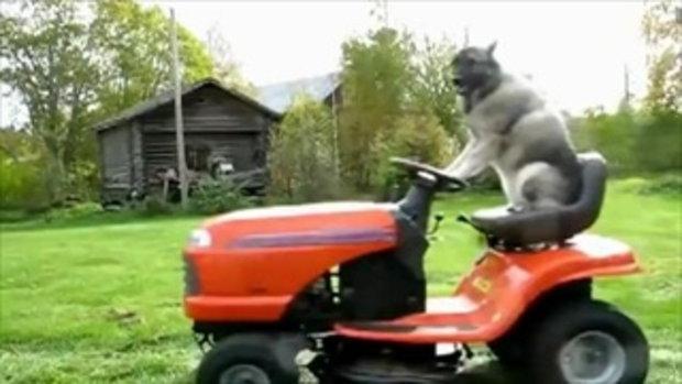 ว้าว! สุนัขขับรถ