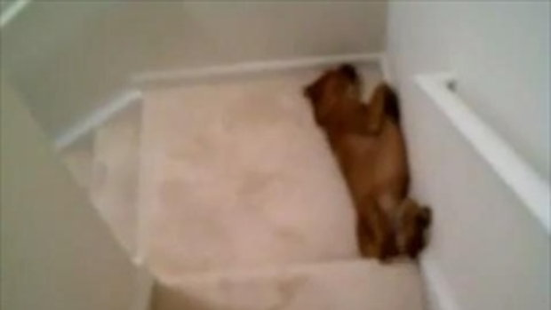 เจ้าหมาจอมขี้เกียจ!!