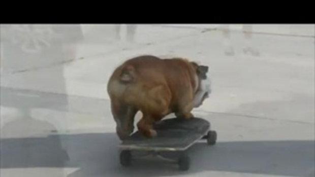 หมาเล่นสเก็ตบอร์ด!! โคตรเก่ง