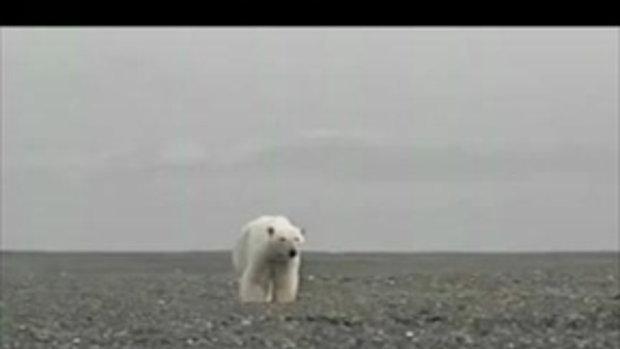สิงโตทะเล ปะทะ หมีขั้วโลก