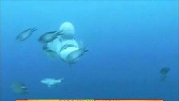 ปลาเชร็ค หน้าคล้ายยักษ์การ์ตูน