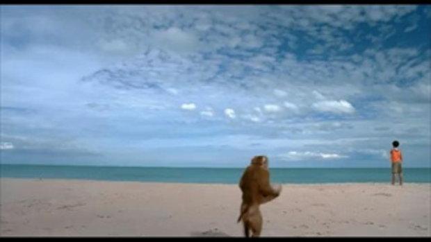 กะปิ ลิงจ๋อไม่หลอกจ้าว - trailer