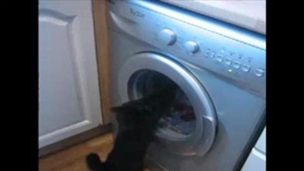 เครื่องซักผ้า พลังน้องเหมียว เท่ห์สุดๆไปเลย