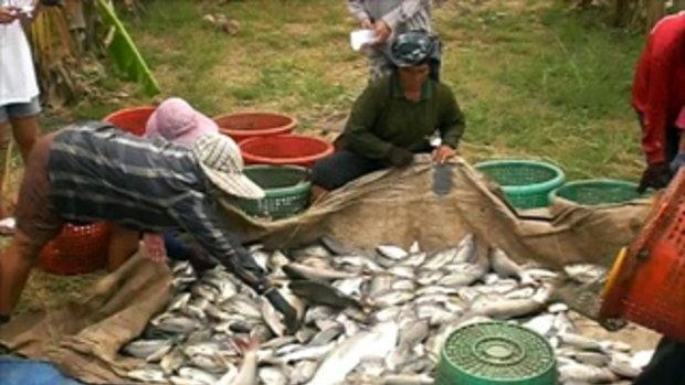 7ลุงสันติบ่อปลาธรรมชาติ