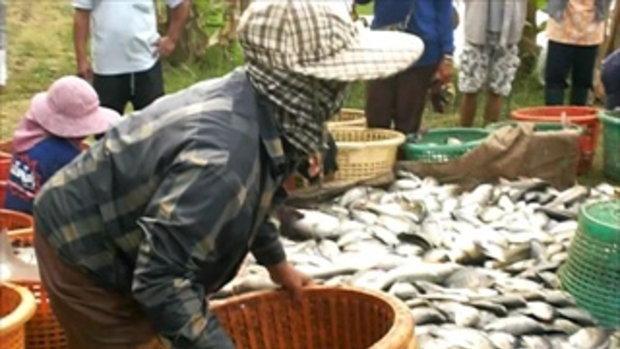 8ลุงสันติบ่อปลาธรรมชาติ
