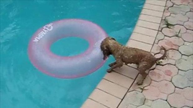 น้องหมา อยากได้ห่วงยาง