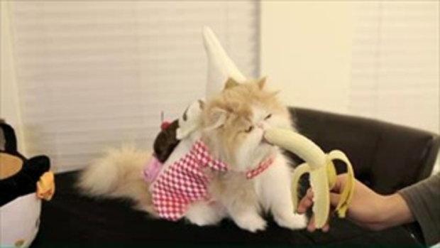 แมวกินอาหารน่ารักมาก กินอะไรมาดูกัน