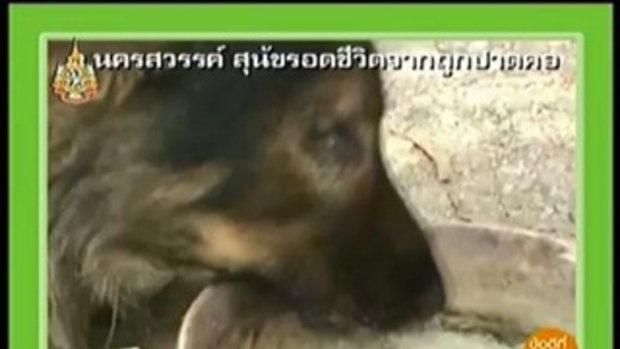 ปาดคอสุนัข - ข่าวข้นคนข่าว