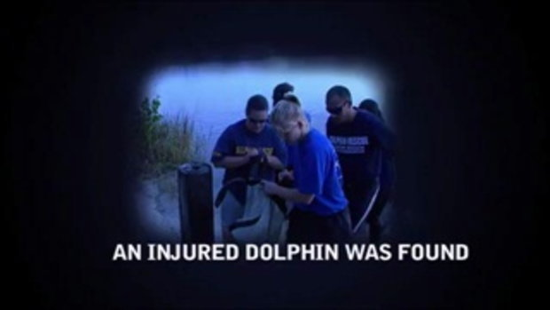 DOLPHIN TALE  - Special Content Trailer