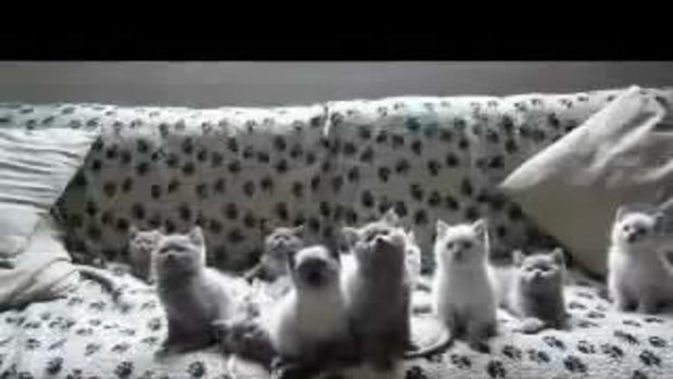 น้องแมว พร้อมเพรียง