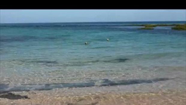 สุนัขใจถึงดำน้ำไล่งับฉลามในทะเล