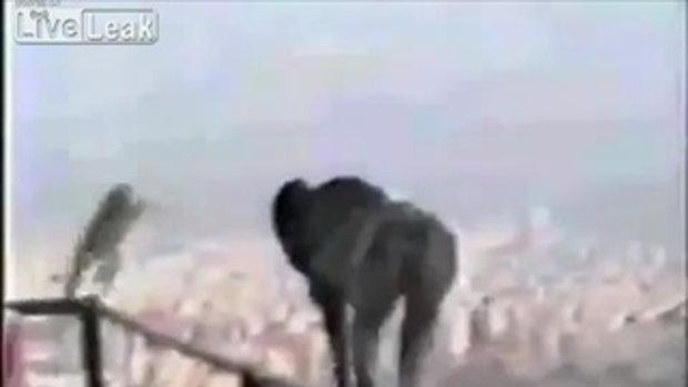 น่าสงสาร ลูกลิงสุดซื่อ เล่นซนกระโดดหอสูงดับ