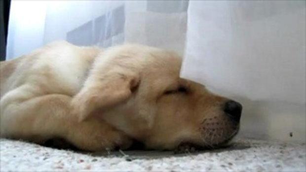 น้องหมานอนสบายใจจัง