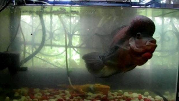 ปลาครับปลา
