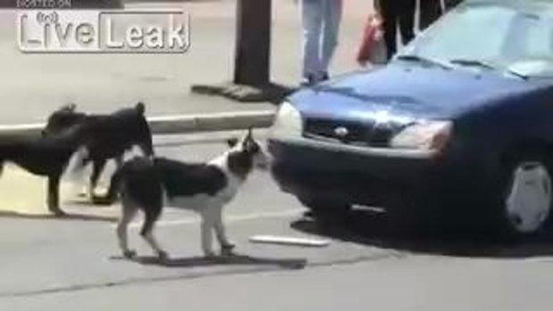 ใครเอาสุนัขมาทิ้งไว้แถวนี้