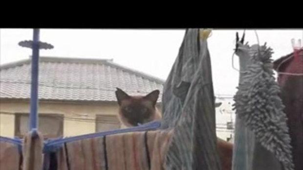 แมวจะโดดข้ามตึก โดดไม่ถึง อย่างฮา