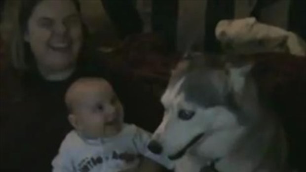 Dog makes baby laugh by sia.co.th