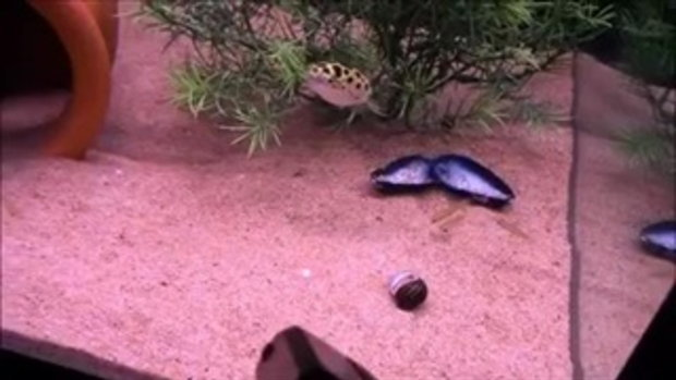 ยิงเลเซอร์แกล้งปลา ในพิพิธภัณฑ์สัตว์น้ำ