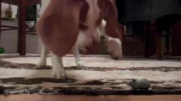 ของเล่นใหม่น้องหมา เพลินเลยนะแก