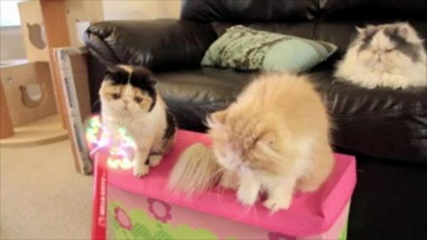 Cats vs Hello Kitty Light-Up Foam Fan  เรามาเล่นกันดีกว่า by sia.co.th
