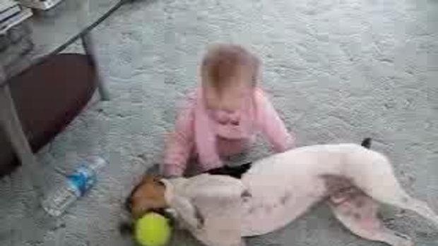 เด็กจะกินสุนัข