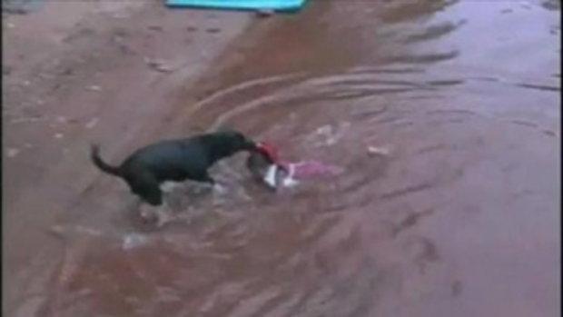 หมาช่วยเด็กตกน้ำ