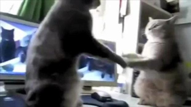 แมวทะเลาะกันอย่างฮา (พากย์ไทยด้วยนะอิอิ)