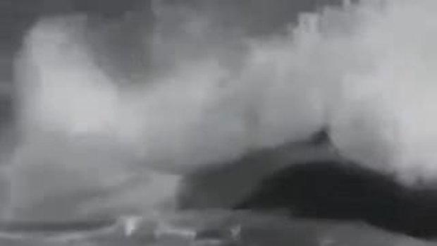 วาฬออสก้ากินคนบนชายหาด
