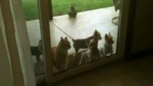 พี่เหมียว เปิดประตูให้น้องหมาเอง
