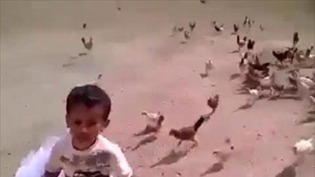 ช่วยด้วย! หนูโดนไก่วิ่งไล่ อย่างฮา