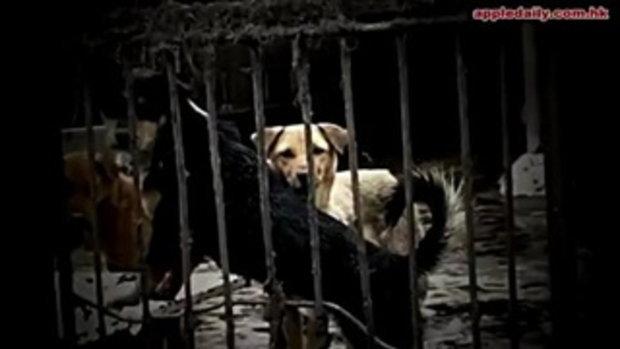คลิปแฉ!! ฆ่าหมู่สุนัข ทำบะหมี่เนื้อหมาในจีน