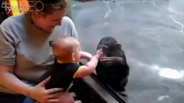 ลิงหยอกเด็ก 2ชีวิตสื่อสารกันผ่านกระจก