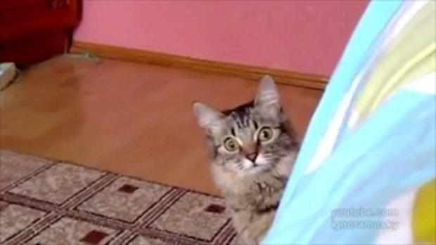 แมวตัวนี้สงสัยกำลังคิดอะไรชั่วร้ายอยู่ ไม่เชื่อมาดู