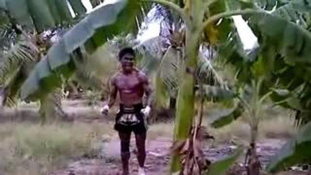 โหด! บัวขาว ป.ประมุข โชว์เตะต้นกล้วย