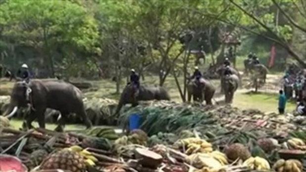 จัดเต็ม! ปางช้างแม่สาระดมผัก-ผลไม้ ตั้งสะโตกเลี้ยงช้างกว่า 70 เชือก