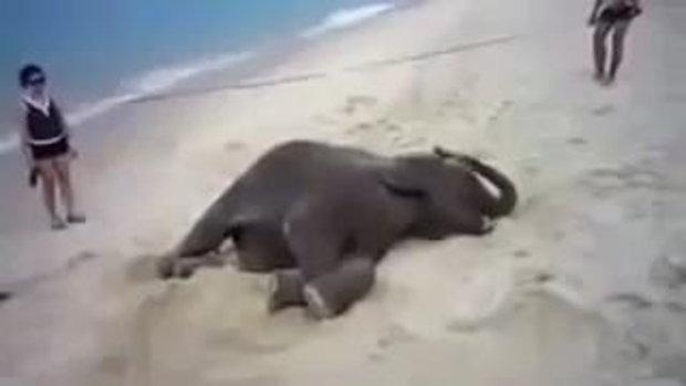ช้างน้อย พึ่งเคยเจอทะเลครั้งแรก