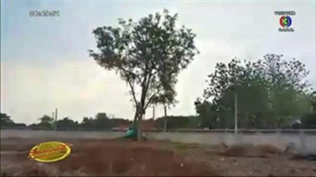 คลิปนาทีต้นไม้ใหญ่โค่นทับเสาไฟฟ้าที่บุรีรัมย์ (4พ.ค.58)