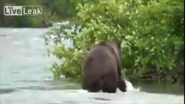 เกือบโดนหมีเขมือบไปแล้วมั้ยล่ะ ! ดีนะที่มองไม่เห็น