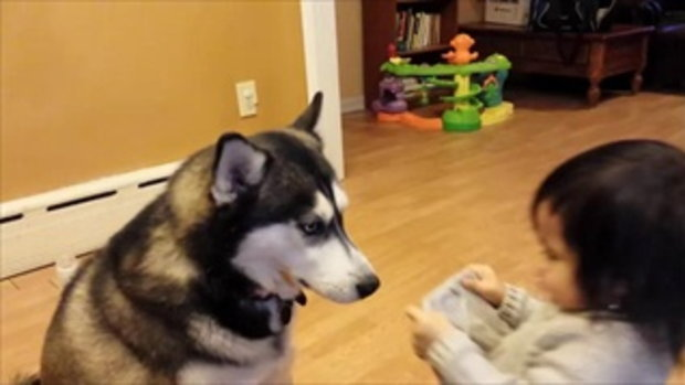 Baby Loves Siberian Husky Dog! - YouTube - Copy