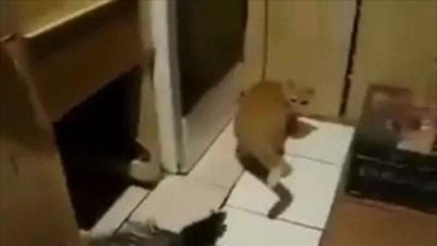 หมดกัน ! เสียสถาบันแมวหมด เจอหนูวิ่งไล่กัดแบบนี้