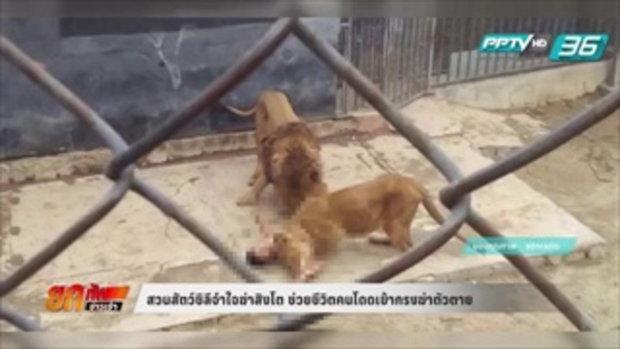 สวนสัตว์ชิลีจำใจฆ่าสิงโต ช่วยชีวิตคนโดดเข้ากรงฆ่าตัวตาย