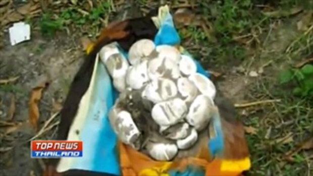 ชาวบ้านผงะ!! พบไข่งูเหลือกว่า 40ฟอง ก่อนตามล่าหาตัวแม่งู พบยาวกว่า 4 เมตร