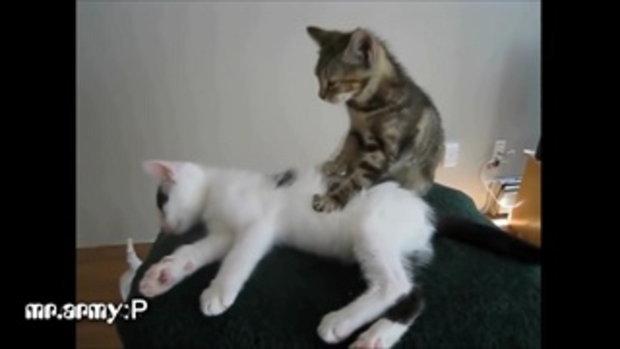 คลิปแมวน่ารักๆ สุดฮา-1