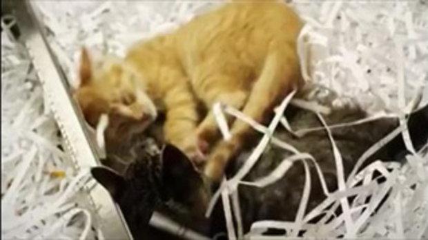 แมวคุยกันโครตน่ารักเลย