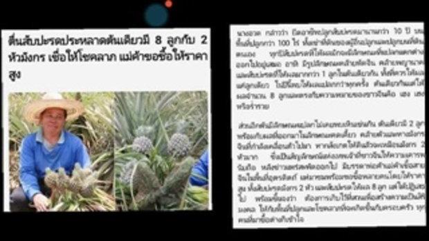 หวยเด็ด 16_6_59 ตื่นสับปะรดประหลาดต้นเดียวมี 8 ลูกกับ 2 หัวมังกร