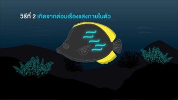 กบนอกกะลา : เปิดความลับชีวิตเรืองแสง ช่วงที่ 3/4 (13 พ.ค.59)